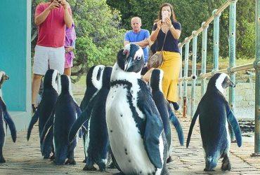 Penguin Town stagione 2 tutto quello che sappiamo u0PVU 1 21
